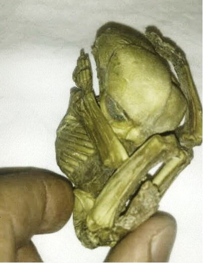 Small humanoid figure may prove alien connection