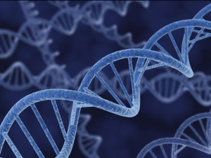 Starseed...DNA...in Humans