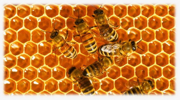 honeycomb_valerie_solheim,_bees,_paranormal_research_forum