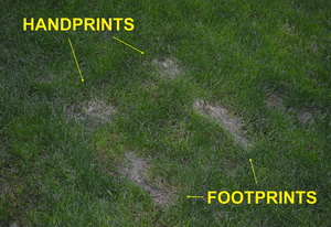 Romanek_handprints_footprints_burned_in_lawn