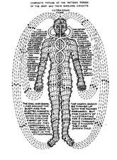 human_energy_flow