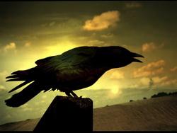 Black crow-spirit guide, PRF